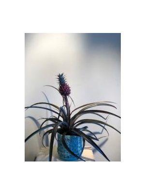 Ananas avec cache pot