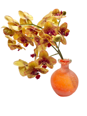 Orchidée avec pot
