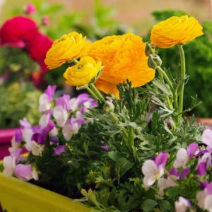 Assortiment fleurs printanières