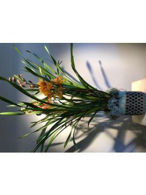 Plante de Cymbidium avec cache pot