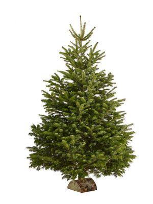 Sapin de Noël 220-300cm