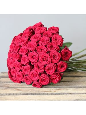 50 rose 'Red Naomi' 60cm - Fleuriot