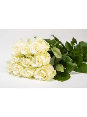 12 roses 'Avalanche' 60cm - Fleuriot