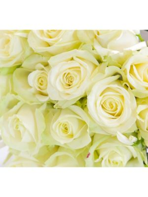 50 roses 'Avalanche' 60cm - Fleuriot