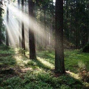 """Carte """"Dans la forêt"""""""