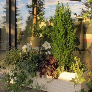Assortiment plantes, arbustes