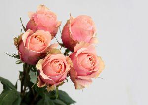 Rose 50 cm Rose pâle