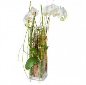 Magie d'orchidée en plante ou branche (y. c. vase)
