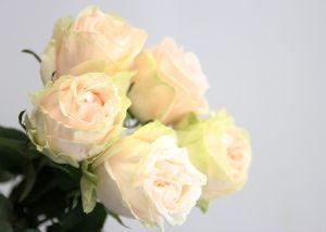 Rose 50 cm Blush