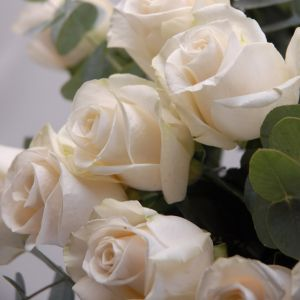 Rose 50 cm crème