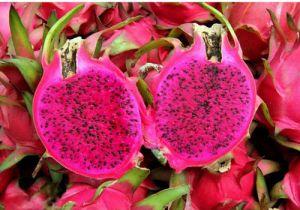 Fruit du dragon rose