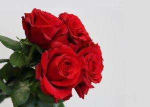 Rose 50 cm Rouge